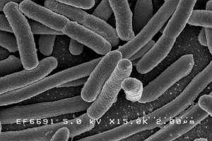 O que são Probióticos e por que são tão Importantes?
