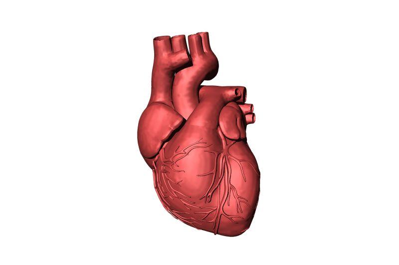 Autofagia e saúde do coração