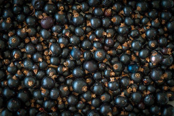 Óleo de semente de groselha negra: fontes, benefícios para a saúde e usos
