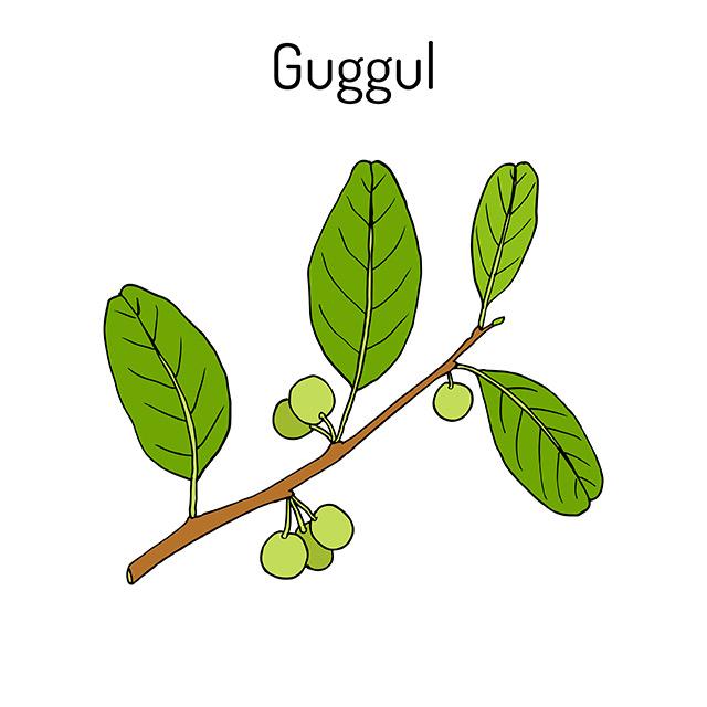 Guggul: fontes, benefícios para a saúde, nutrientes, usos e constituintes