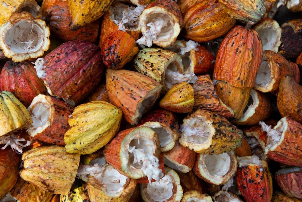 Cacau – Descubra seus deliciosos beneficios, usos e origem.