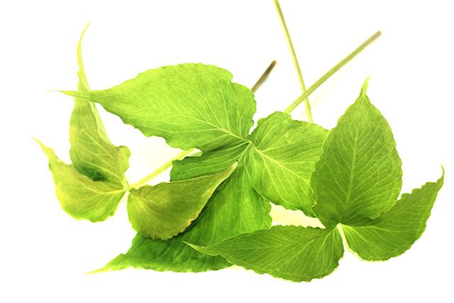 Pinellia – Descubra seus usos, benefícios e origem.
