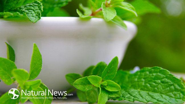 Maneiras de usar o óleo de orégano para uma saúde melhor