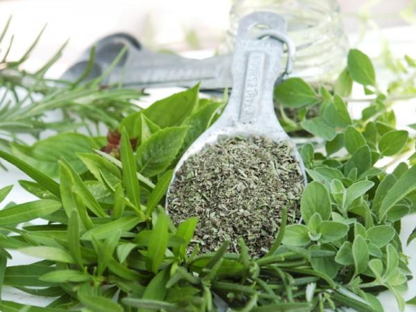 Óleo de orégano: conheça os usos e benefícios desse produto