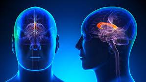 Regeneração do cérebro: 12 maneiras de curar células cerebrais