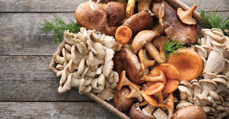 A mágica dos cogumelos