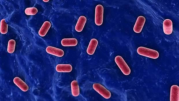 Grande ou pequeno: a inflamação afeta muitas partes do corpo