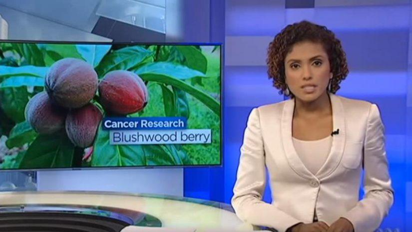 EBC46 – Bagas de Blushwood para o tratamento do câncer (Últimas evidências científicas)